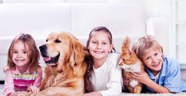 Kedi & Köpek Sahipleri için Veteriner Hekiminizden 10 Altın Tavsiye