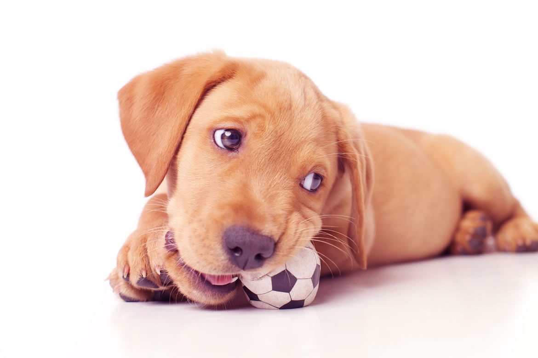 Köpek Hırlaması Ne Demek