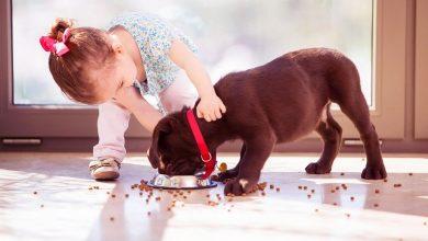 Yeni Köpek Almak İsteyenler İçin Dikkat Edilmesi Gerekenler