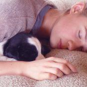 Evde Köpek Eğitimi Önemi
