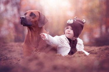 Bebekler ve Köpekler