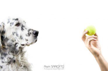 Evde Köpek Eğitiminin Önemi