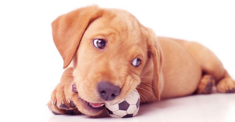 Köpeklerde davranış bozukluğu nedir ve sebepleri nelerdir?