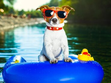 Köpekle Tatile Hazır Mısınız?